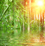Bamboo and bright sunshine