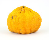 A single large ugly fruit on a white background poster