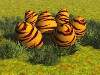 Tiger-Eier