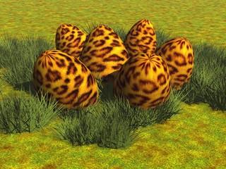Leoparden-Eier