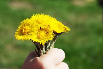 Kleiner Junge verschenkt selbstgepflückte Blumen