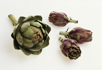 Artichokes: large headed artichoke & Violetto di Toscano