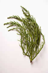 Marsh samphire on white background