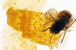 Honey, honeycomb and bee