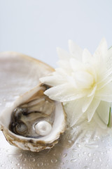 Fresh oyster with pearl, white water lily beside it