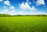 Fototapety field of spring flowers and perfect sky