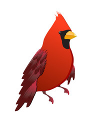 vector cardinal red bird