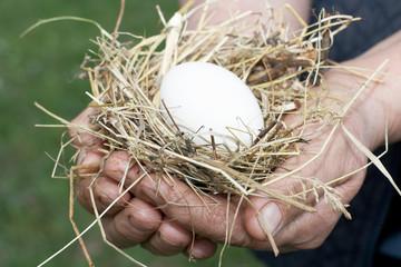 nest in hand