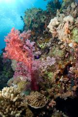 Colourful Soft Corals