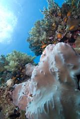 Tropical Coral Sea