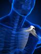 Human arm concept with bones