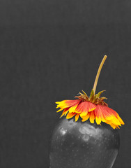Black and White Image of Apple and Flower on Top
