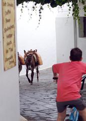 Tourist Donkeys