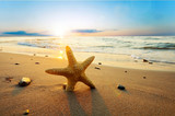 Fototapety Starfish on the beach