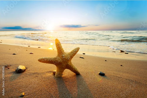 Poster Kust Starfish on the beach