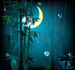night rainforest