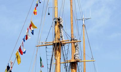 tree sail