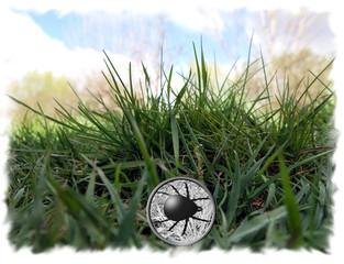 Linse im Gras