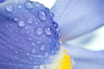 flowers irises .