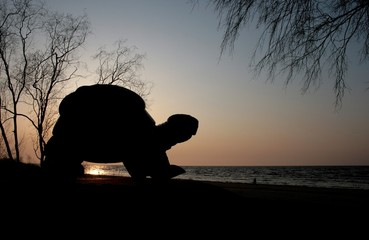 silhouette of a turtle sculpture