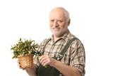 Elderly hobby gardener with clippers poster
