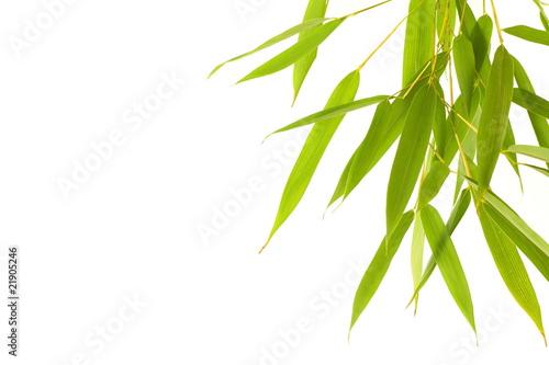 Fotobehang Bamboe feuille de bambou détourées