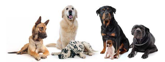 six chiens