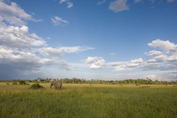 Elefante africano parco Amboseli Kenya