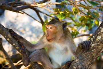 My monkey model