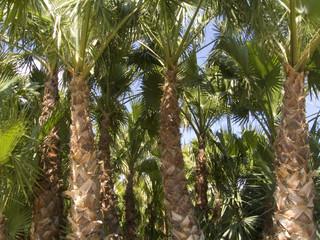 palmeras campo 2