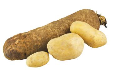 Patata del Ghana 03 04 10