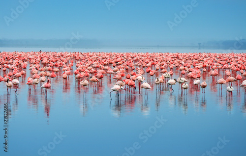 Foto op Aluminium Flamingo flock of flamingos