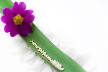 Homeopathic medicine on green leaf