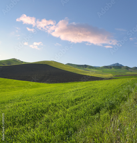 spring landscape of green grass and plowed land at the twilight