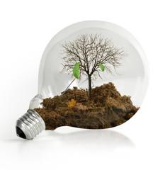 Lampadina albero ecologia
