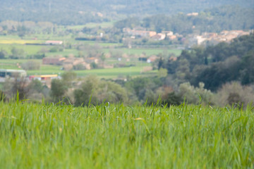 prados verdes primavera costa brava 8