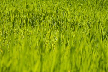 prados verdes primavera costa brava 4