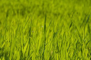 prados verdes primavera costa brava 6