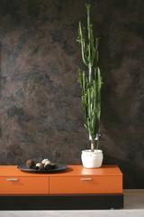 high cactus