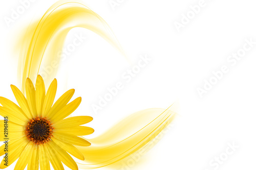 yellow Flower Blume