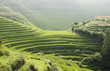 Green rice paddies in China