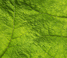Close up of a green leaf