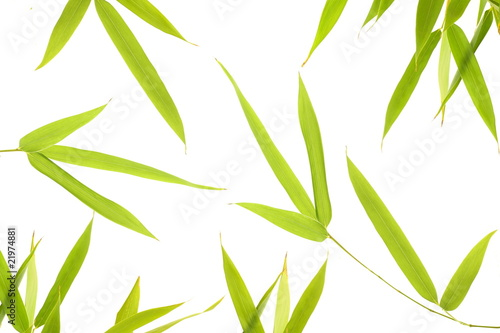 Foto op Canvas Bamboo feuille de bambous