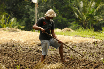 Reisfelarbeiten