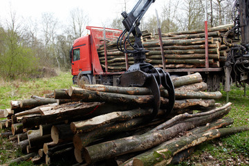 unloading fire wood with the truck crane 01