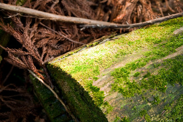 The fallen trees show enviromantal decison.