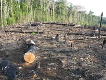 Wycinanie lasów - ukośnik i spalić las deszczowy, Amazonia Brazylia