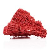 corallo rosso poster