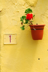 Flower in pot on yellow wall, Tenerife island