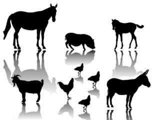 Kleine Gruppe Farmtiere mit Schattenspiegelung